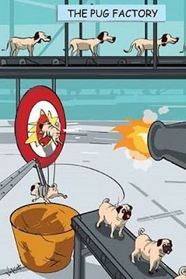How pugs are made..