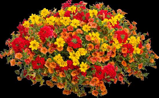 Zoom dise o y fotografia arbustos con flores - Arbustos con flores ...