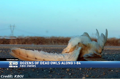 Dozens of Dead Owls On Idaho Highway