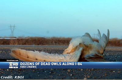 Dozens of Dead Owls On Idaho Highway