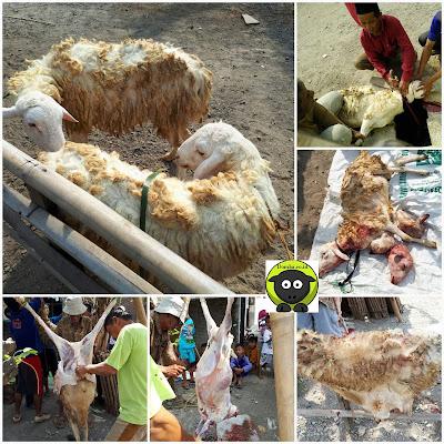 Cara Benar Menyembelih Domba Qurban