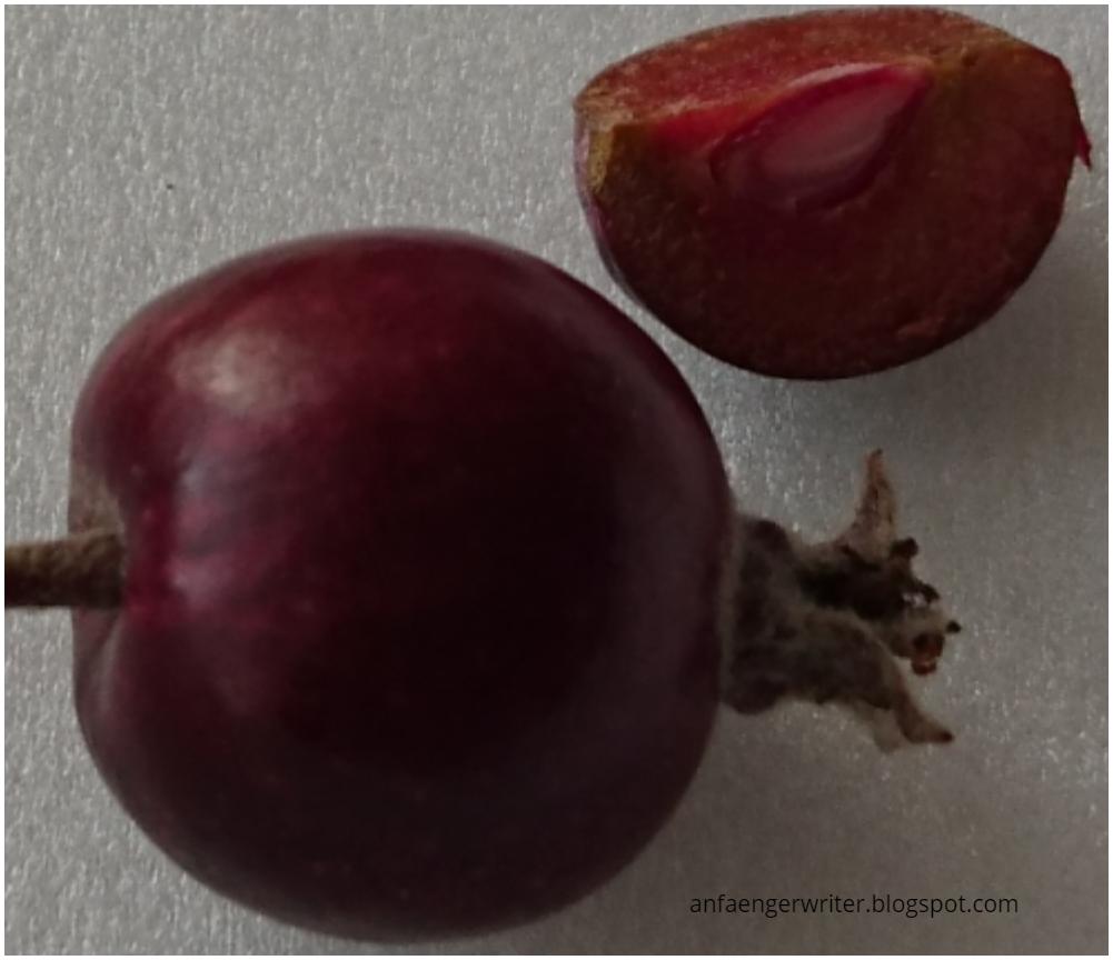 Elmaların en lezzetli çeşitleri: bir liste ve açıklama