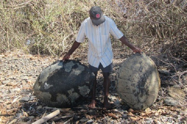 Organized poaching is decimating Madagascar's sea turtles