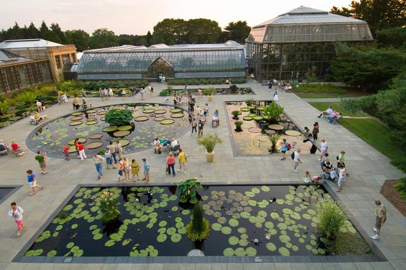 Exhibición anual de nénufares en Longwood Gardens. Waterlily Display