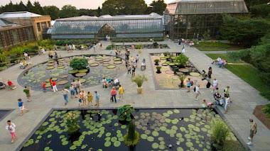 Exhibición de coloridos nenúfares en Longwood Gardens
