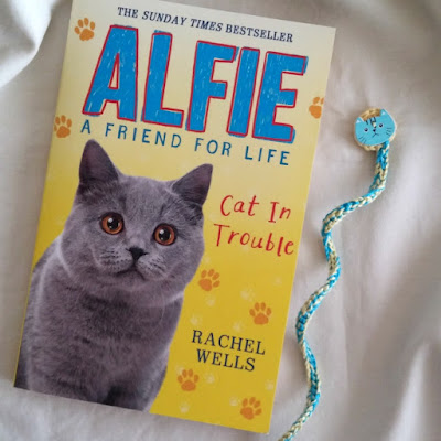 alfie-friend-for-life-cat-trouble