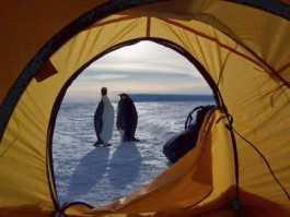 Kemping Di Antartika