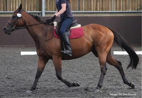 ridden horse ethogram scoring