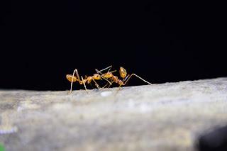 Saat Semut Mengambil cuti kerja