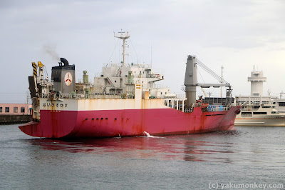 Yakushima Ferry Hibiscus