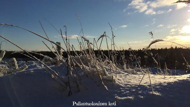 #talvimaisema #luontokuva #talvi #winter #feelgood #peaceful #sisäinenrauha #kaunisluonto #suomenluonto #snowynature