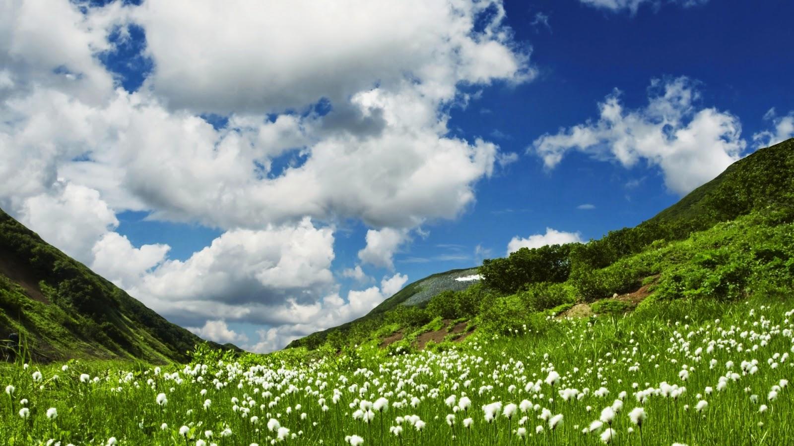 Groene heuvels met witte bloemen in de lente