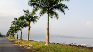 Palms along the coast of Luba