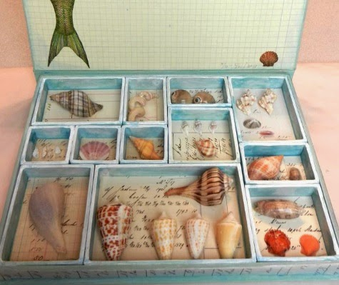 shell display box