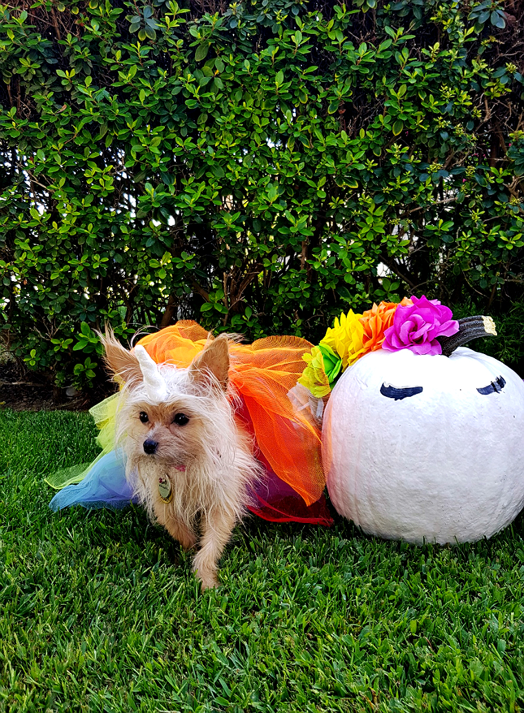 DIY Unicorn Pumpkin + Dog Costume- 5 Budget Friendly Pet Costume Ideas #DoThe99 #99Obessed #AD