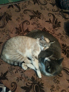Две спящие кошки