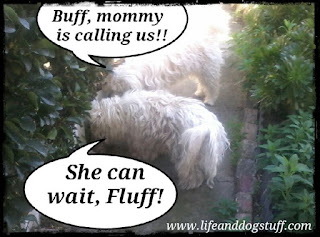 My dog won't listen -  Buffy and Fluffy