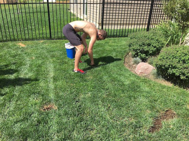 process of cleaning out dead grass from patch