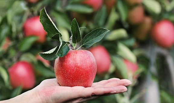 IS APPLE GOOD FOR DIABETIC PATIENTS