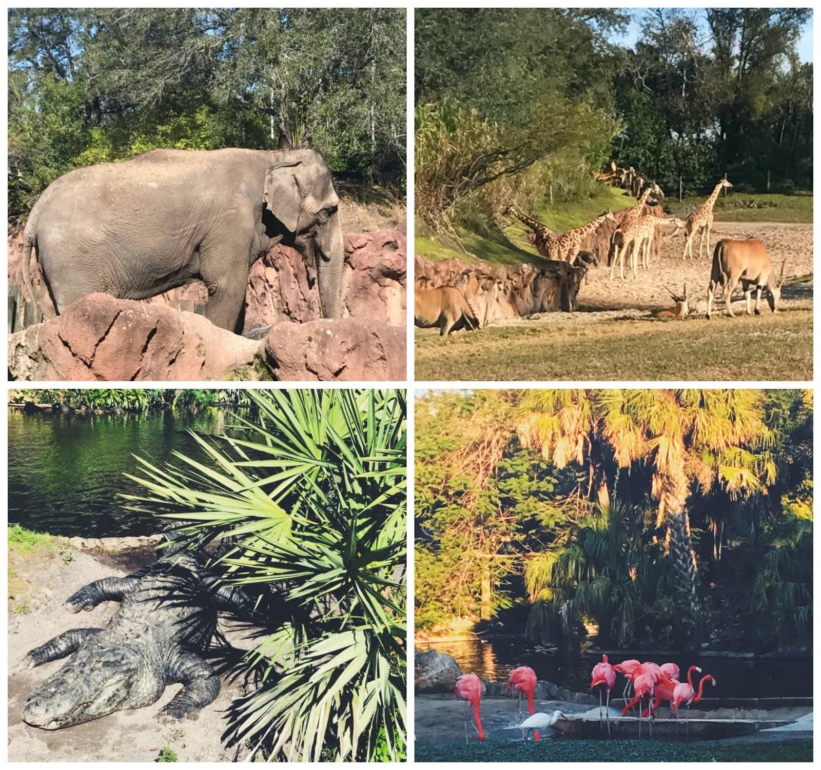 Busch gardens Tampa7
