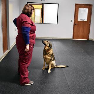 Greatmats Rubber Flooring Rolls at Babinski Foundation animal shelter floor