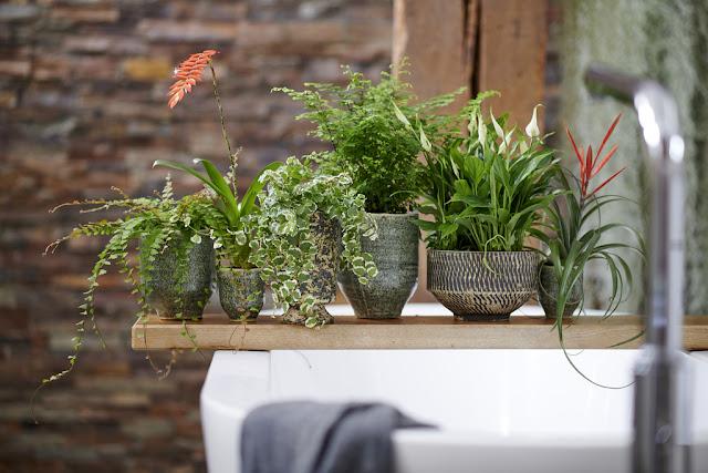 ¿Cual es la clave para triunfar con las plantas en el baño?