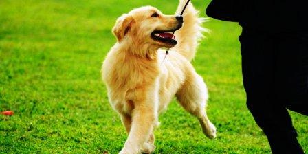 anjing mengenali tuannya dengan bau
