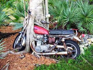 Απίστευτα αντικείμενα σφηνωμένα σε κορμούς δέντρων...