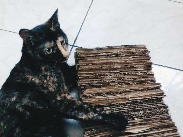 Gato com arranhador