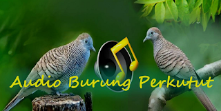 Download Suara Perkutut Durasi Panjang Mp3 Gratis