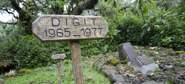 Dian Fossey Digit 1965-1977