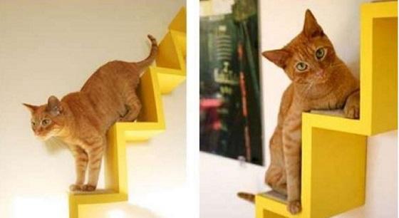 carton et chat 23