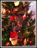 Russian Blue kitten in Christmas Tree