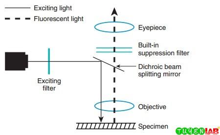 Light path of incident light microscope.