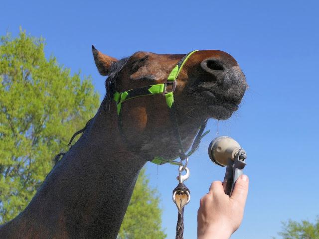 cheval douche coup de chaleur