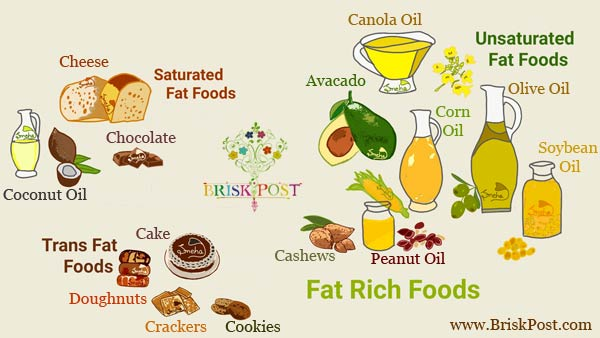 Good Fat foods Vs Bad Fat Food: What to Eat and What to Avoid? | Fat rich food illustration: saturated fat foods (cheese, chocolate, coconut oil), trans fat food (cake, doughnuts, crackers, cookies) and unsaturated fat foods (avocado, cashews, soybean, peanut, corn, canola, olive oils)