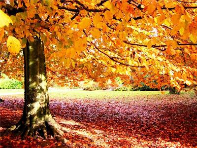 """alt=""""фото осени, фотки осени, красивые фото осень, золотая осень, осень, фотографии осени, деревья, листья, осенние листья"""""""