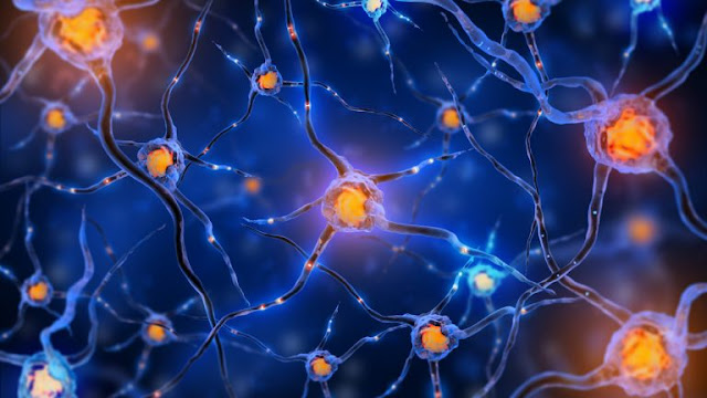 Neuronal Connections and the Chemoaffinity Hypothesis | El Paso, TX Chiropractor