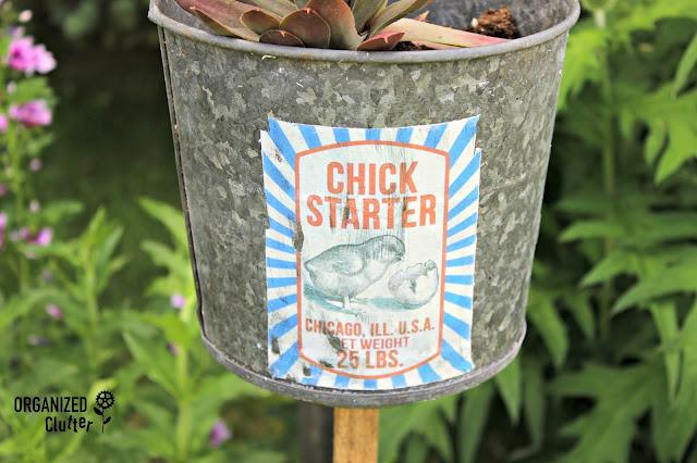 """""""Chick Starter"""" Sempervivum Junk Garden Planter organizedclutter.net"""
