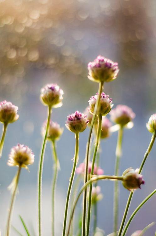 fiori-campo