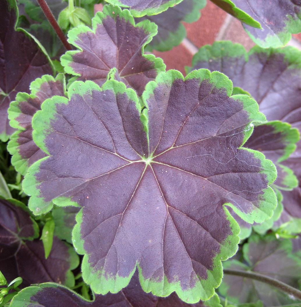Arty Aitch: My garden in August....