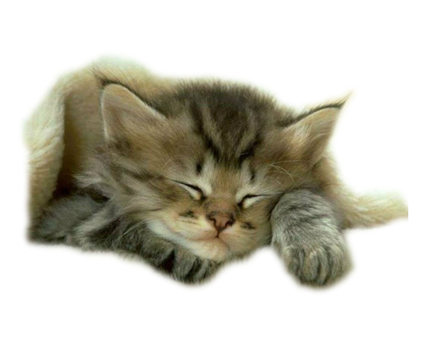 Grafika Gify Kartki Kot Cat Png