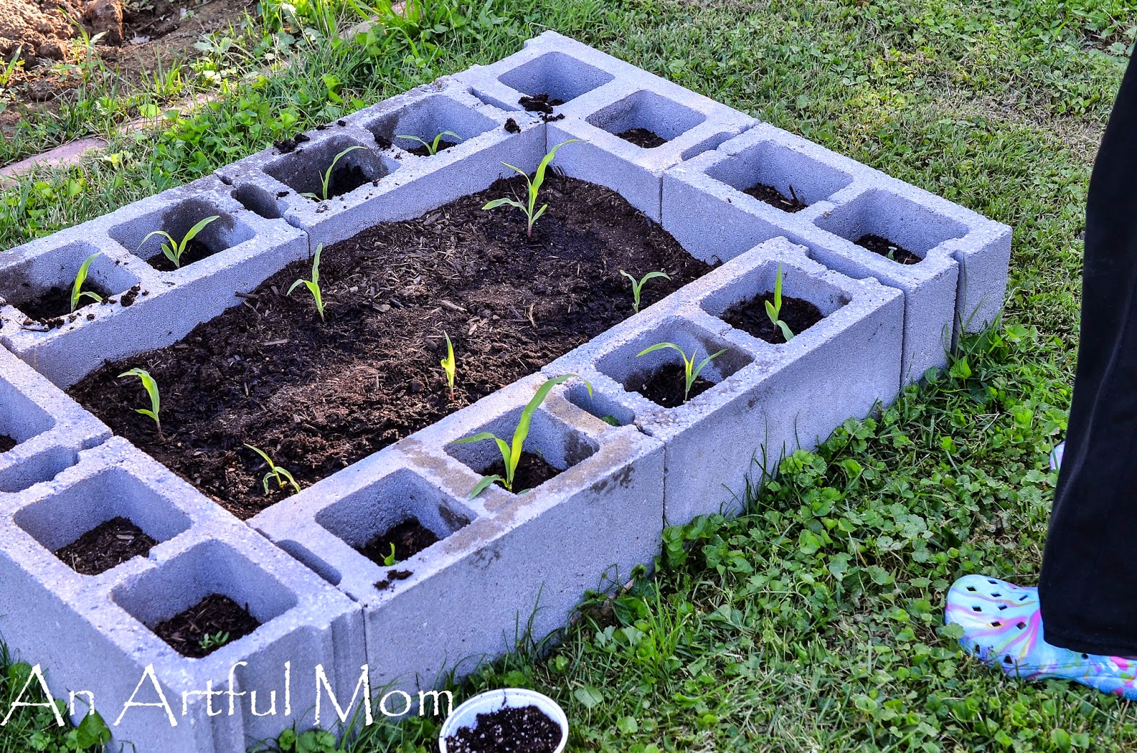 raised bed garden with cinder blocks