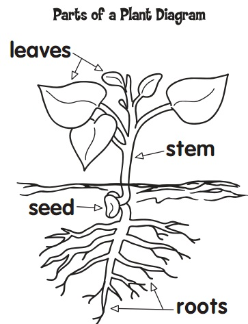 math worksheet : science plant activity  almales : Parts Of A Plant Worksheet Kindergarten
