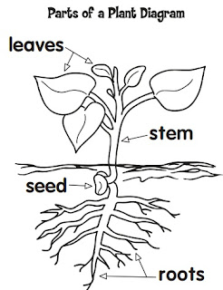 Michelles charm world studying plants and having fun for Parts of a flower coloring page