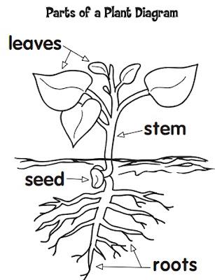 Kids Printable Nature Worksheets