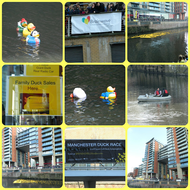 Ducks Racing Duck Race Spinningfields Manchester 2013 for Brainwave