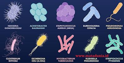 pengertian, struktur, dan ciri-ciri bakteri