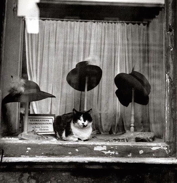 chats paris photos brassai