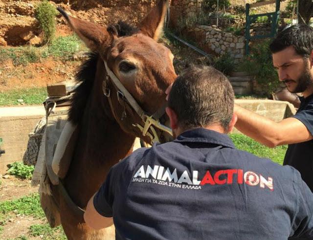 Δωρεάν κτηνιατρική φροντίδα στα ιπποειδή της Ύδρας από την ANIMAL ACTION